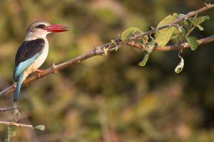 Birding at Palala