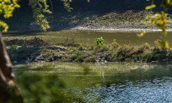 River cruise croc